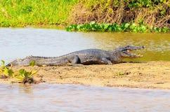 采取在一个沙丘的鳄鱼一sunbath在riv的边际 库存照片