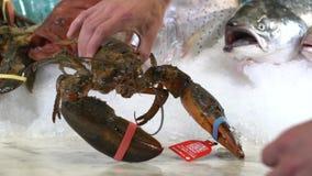 采取在另外鱼背景的一只手在冰的未加工的龙虾 影视素材