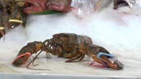 采取在另外鱼背景的一只手在冰的未加工的龙虾 股票视频