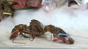 采取在另外鱼背景的一只手在冰的未加工的龙虾 股票录像