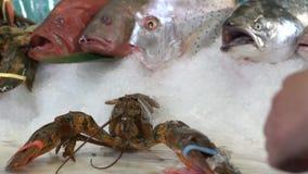 采取在另外鱼背景的一只手在冰的龙虾 股票视频