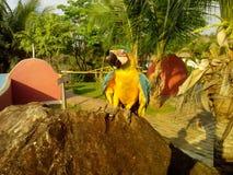采取晒日光浴的鹦鹉在日落 免版税图库摄影