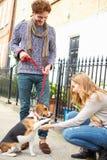 采取步行的夫妇狗在城市街道上 库存图片