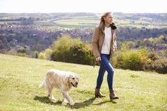 采取步行的成熟妇女金毛猎犬在乡下 免版税图库摄影