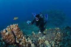 采取礁石的射击的轻潜水员 免版税库存照片