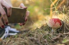 采取蛤蟆菌的摄影女孩在秋天森林里采蘑菇 免版税库存图片