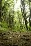 采取远足在森林里的深呼吸 免版税库存图片