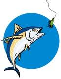 采取金枪鱼的长鳍金枪鱼诱饵 库存例证