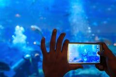 采取鱼的快照的在水族馆的射击一个人 库存照片