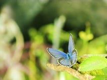 采取Sunbath的蝴蝶 库存照片