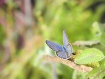 采取Sunbath的蝴蝶 免版税库存图片