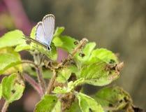 采取Sunbath的蝴蝶 库存图片