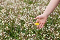 采摘一朵黄色花的手 库存图片
