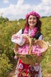 采摘保加利亚桃红色玫瑰的女孩在庭院里 免版税库存图片
