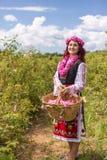 采摘保加利亚桃红色玫瑰的女孩在庭院里 免版税图库摄影