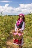 采摘保加利亚桃红色玫瑰的女孩在庭院里 免版税库存照片