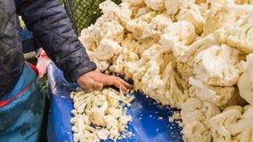 采摘在一个柜台的新鲜的花椰菜的卖主人在一个典型的土耳其蔬菜水果商义卖市场在埃斯基谢希尔,土耳其 库存图片