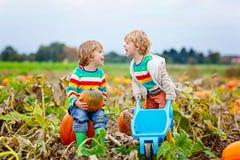 采摘在万圣夜或感恩南瓜的两个小孩男孩南瓜补丁 库存照片