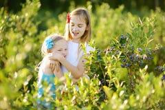 采摘在有机蓝莓农场的逗人喜爱的妹新鲜的莓果在温暖和晴朗的夏日 免版税库存图片