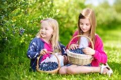 采摘在有机蓝莓农场的逗人喜爱的妹新鲜的莓果在温暖的夏日 库存图片
