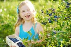 采摘在有机蓝莓农场的逗人喜爱的小女孩新鲜的莓果在温暖和晴朗的夏日 免版税图库摄影