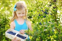 采摘在有机蓝莓农场的逗人喜爱的小女孩新鲜的莓果在温暖和晴朗的夏日 库存图片