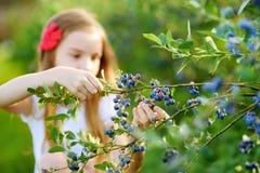 采摘在有机蓝莓农场的逗人喜爱的小女孩新鲜的莓果在温暖和晴朗的夏日 图库摄影