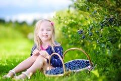 采摘在有机蓝莓农场的逗人喜爱的小女孩新鲜的莓果 库存照片