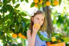 采摘在晴朗的橙树的可爱的小女孩新鲜的成熟桔子从事园艺 库存照片