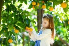 采摘在晴朗的橙树的可爱的小女孩新鲜的成熟桔子从事园艺 免版税库存照片