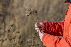 采摘干燥花的妇女 免版税库存照片
