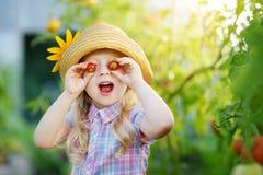 采摘新鲜的成熟有机蕃茄的可爱的小女孩佩带的帽子自一间温室在夏天晚上 免版税图库摄影