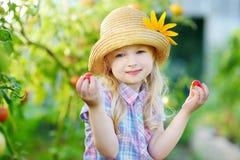 采摘新鲜的成熟有机蕃茄的可爱的小女孩佩带的帽子自温室 图库摄影