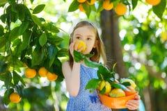 采摘新鲜的成熟桔子的可爱的小女孩 图库摄影