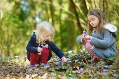 采摘春天的第一朵花可爱的小女孩在森林在美好的晴朗的春日 免版税库存照片