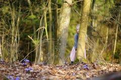 采摘春天的第一朵花可爱的小女孩在森林在美好的晴朗的春日 免版税库存图片