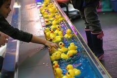 采摘黄色鸭子的手 免版税库存图片