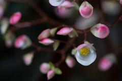 采撷开花的花 免版税库存图片