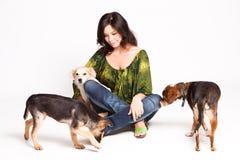 采用的狗 免版税库存照片