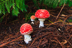 采蘑菇伞菌 免版税库存图片