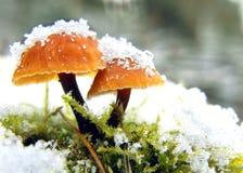 采蘑菇冬天 图库摄影