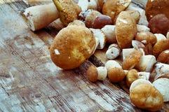 采蘑菇在木背景的cepes 图库摄影