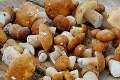采蘑菇在桌上的cepes 免版税库存照片