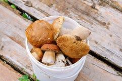 采蘑菇在桶的cepes 免版税库存图片