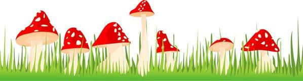 采蘑菇在草的伞菌 免版税库存图片