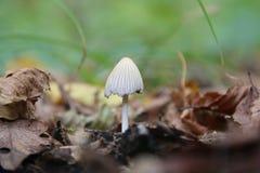 采蘑菇在草背景的秋叶  库存照片