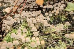 采蘑菇小 库存图片