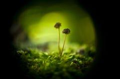 采蘑菇小 库存照片
