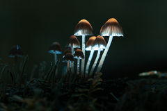 采蘑菇小 免版税库存照片