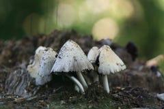 采蘑菇小 图库摄影